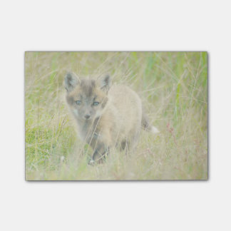 Fox Kit Post-it® Notes 4 x 3