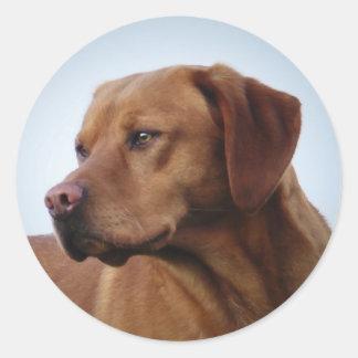 Fox Labrador rojo Gundog Etiqueta Redonda