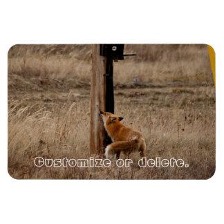 Fox Loves Utility Pole; Customizable Magnet