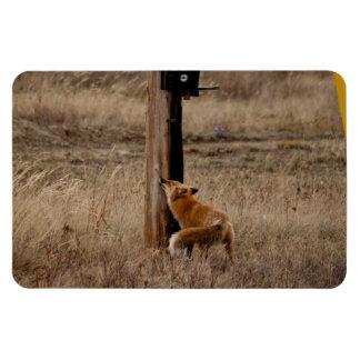 Fox Loves Utility Pole Magnet