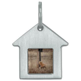 Fox Loves Utility Pole Pet ID Tag