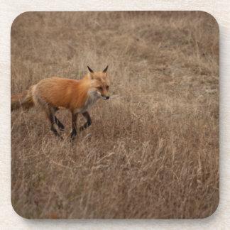 Fox on the Run Coaster