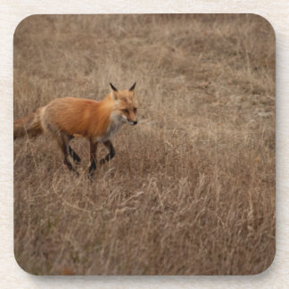 Fox on the Run Drink Coasters