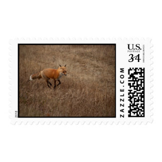Fox on the Run Postage Stamp