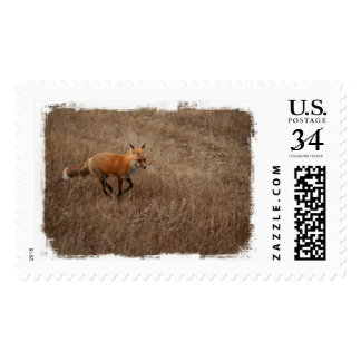 Fox on the Run Postage Stamps