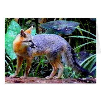 FOX ON TREE GREETING CARD
