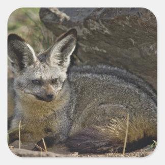 Fox Palo-espigado, megalotis de Otocyon, Masai Pegatina Cuadrada