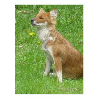 Fox Photo Postcard