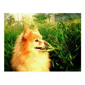 Fox Plays In The Tall Grass Postcard