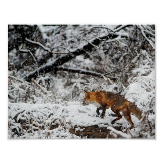 fox poster, foxy decor, fox cub gifts poster