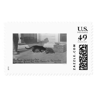 Fox Pups Raised by Cat 1915 Postage
