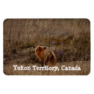 Fox que huele las azafranes; Recuerdo del Yukón Iman De Vinilo