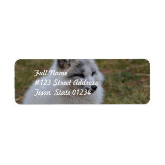 Fox rápido blanco hermoso etiqueta de remite