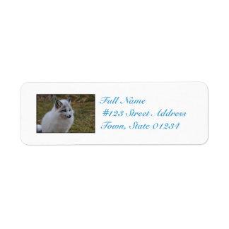 Fox rápido blanco hermoso etiqueta de remitente