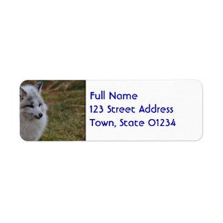 Fox rápido blanco hermoso etiquetas de remite