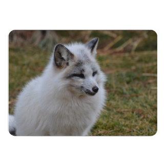 """Fox rápido blanco hermoso invitación 5"""" x 7"""""""