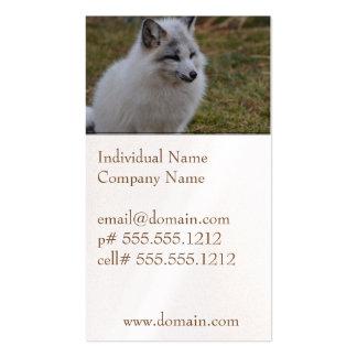 Fox rápido blanco hermoso tarjetas de visita