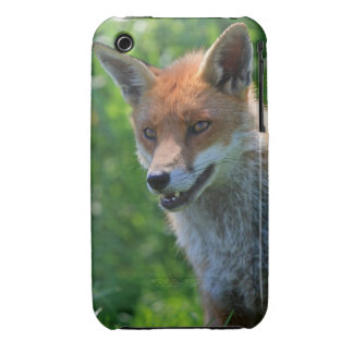 Fox red beautiful photo iphone 3G case mate barely