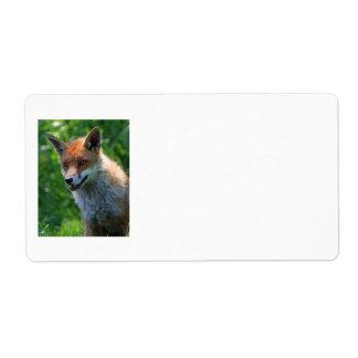 fox red beautiful photo portrait blank labels