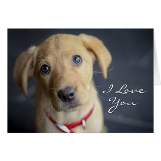 Fox Red Labrador Puppy Card