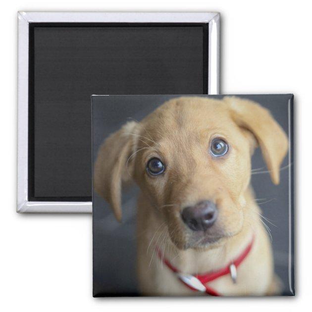Fox Red Labrador Puppy Magnet Zazzle Com