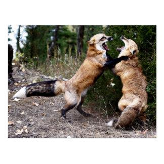 Fox rojo - Baile Postales