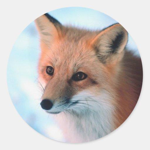 Fox rojo bonito etiquetas redondas