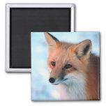 Fox rojo bonito imán de frigorífico