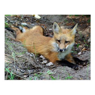 Fox rojo - Chillin Postales