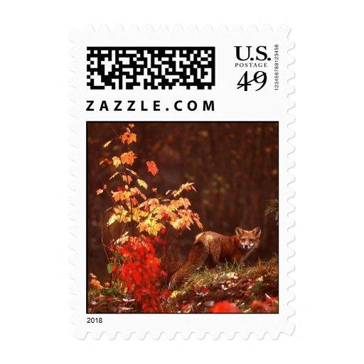 Fox rojo del otoño sellos