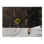 Fox rojo en cumbre tarjetas postales