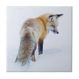 Fox rojo en invierno azulejo cuadrado pequeño