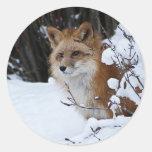 Fox rojo en la nieve pegatina redonda