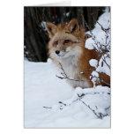 Fox rojo en la nieve tarjeton