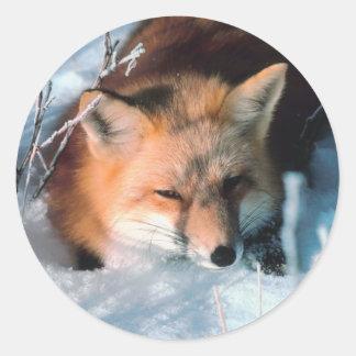 Fox rojo en nieve pegatina redonda