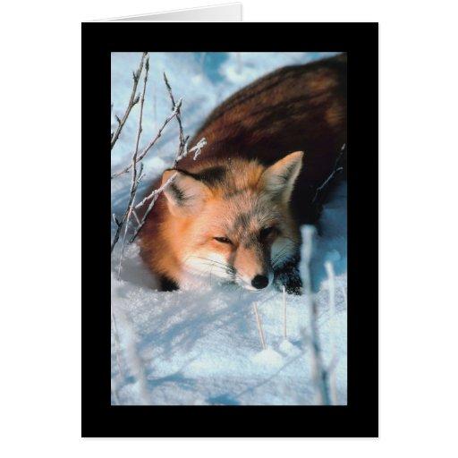 Fox rojo en nieve tarjetas