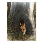 Fox rojo en regalos y ropa de un árbol tarjetas postales