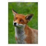 Fox rojo felicitación