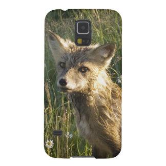 Fox rojo, fulva del Vulpes en el registro, Wildflo Funda De Galaxy S5