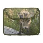 Fox rojo, fulva del Vulpes en el registro, Wildflo Fundas Para Macbook Pro