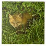Fox rojo joven que sale de la ocultación en arbust tejas  ceramicas