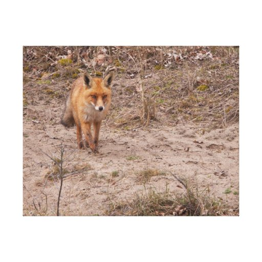 Fox rojo lona envuelta para galerías
