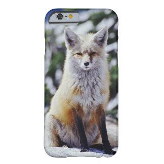 Fox rojo que se sienta en el banco de la nieve, funda barely there iPhone 6