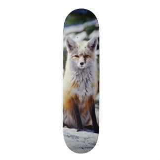 Fox rojo que se sienta en el banco de la nieve, monopatines personalizados