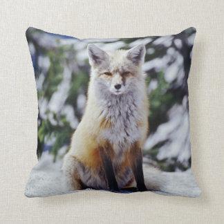 Fox rojo que se sienta en el banco de la nieve, Vu Almohada