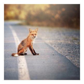 Fox rojo que se sienta en el lado del camino cojinete