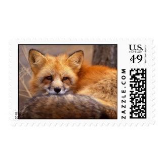 Fox rojo sello