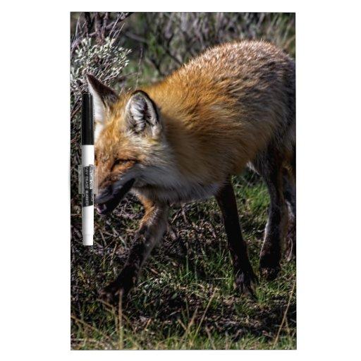 Fox rojo tablero blanco