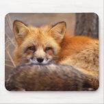 Fox rojo tapete de raton