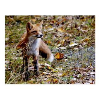 Fox rojo postal